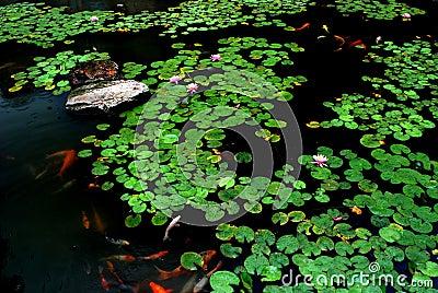 Spring lotus pond