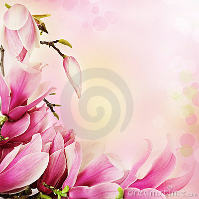 Free Spring Magnolia Flowers Border Stock Photo - 18293970