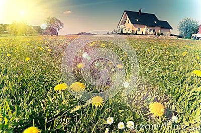 Spring meadows around a rural house