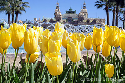 Spring in Monte Carlo