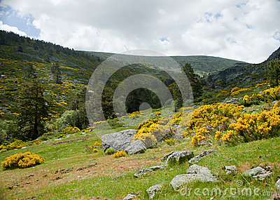 Spring in a mountainous landscape