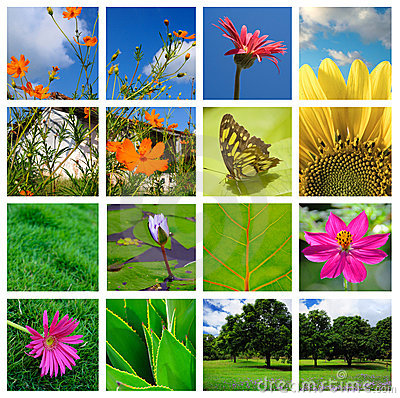 Spring and nature collage