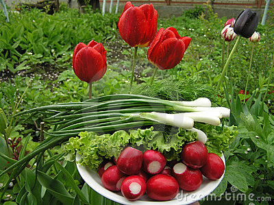 Spring onions and red radish
