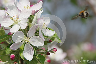 Spring in the orchard.