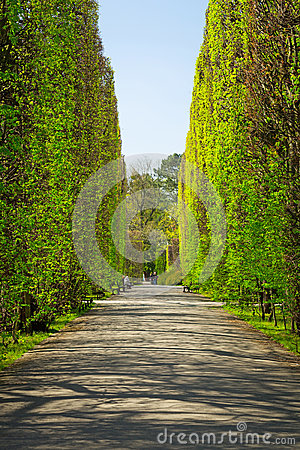 Spring in the Park Oliwski, Gdansk Editorial Stock Image
