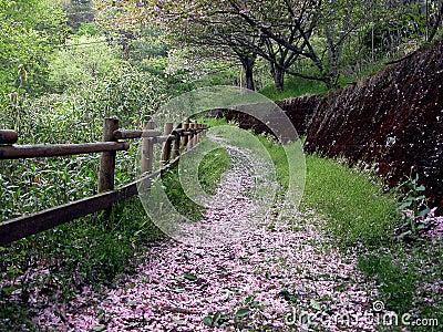 Japanese Garden Plan Architecture