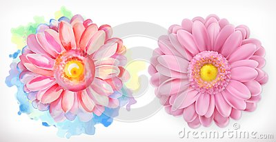 Spring pink flowers, Daisy, watercolor and 3d realism Vector Illustration