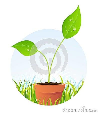 Spring Plant In Pot