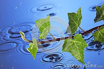 Spring Rain Water leaves
