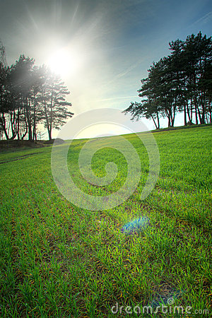 Free Spring Rebirth Of Nature. Stock Images - 42133454