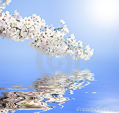 Free Spring Reflections Stock Photos - 4850873