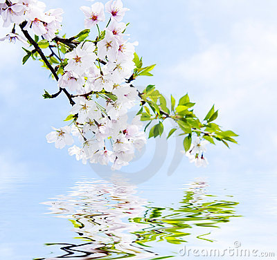 Free Spring Reflections Royalty Free Stock Photos - 5382678