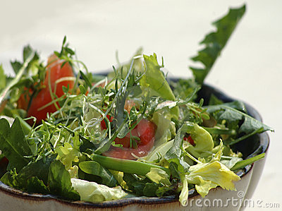 Spring salad with sow-thistle
