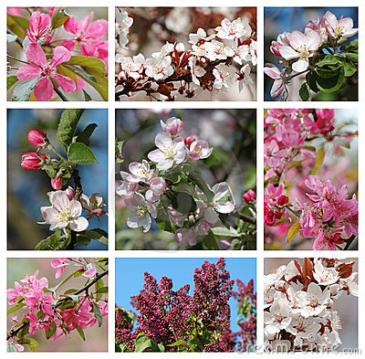 Free Spring Season - Nature Collage With Flowers Royalty Free Stock Image - 14218696