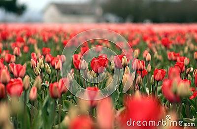 Spring in Skagit Valley