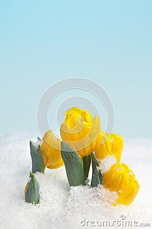 Free Spring Snow Royalty Free Stock Image - 12665876