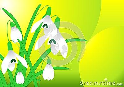 Spring snowdrop vector