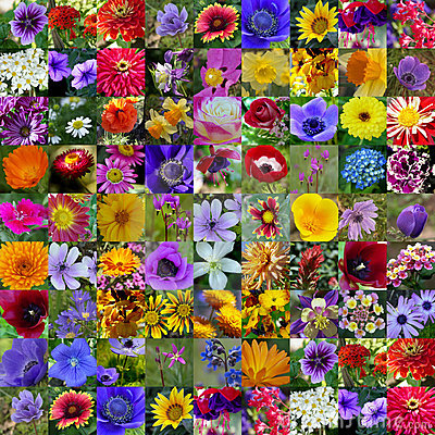 Free Spring & Summer Flower Collection Stock Photo - 660670
