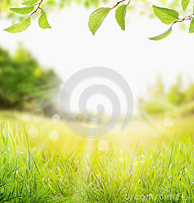 Spring summer nature background with grass, trees branch with green leaves and  sun rays