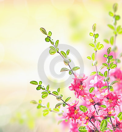 Free Spring Summer Nature Background With Pink Blooming Bush Royalty Free Stock Photo - 48623895