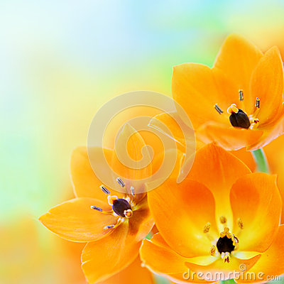 Free Spring Sun Star Flowers Royalty Free Stock Photography - 29392427