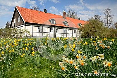 Spring in Swedish park