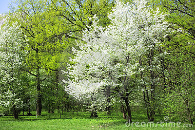 Spring Time In A Park Royalty Free Stock Image - Image: 13400026