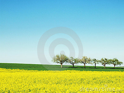 Spring with Trees