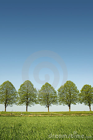 Free Spring Trees Stock Photo - 9050770