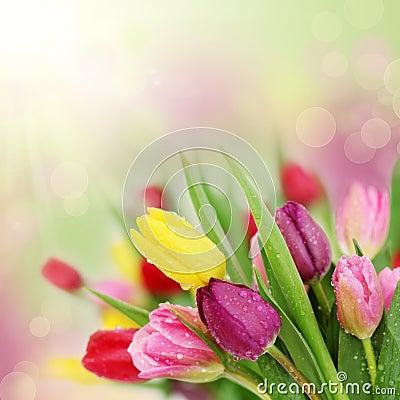 Free Spring Tulip Flowers Stock Image - 18038261