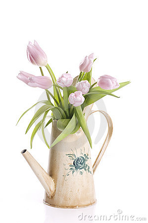 Spring tulip flowers in a watering can