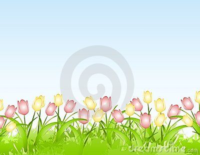 Spring Tulips Flower Border Background