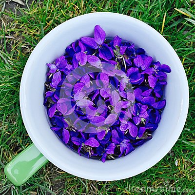 Free Spring Violet Flowers In A Cup Stock Images - 52710224