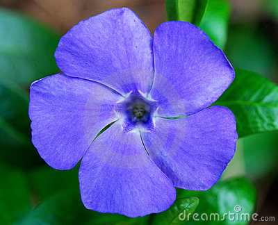 Spring vivid flower