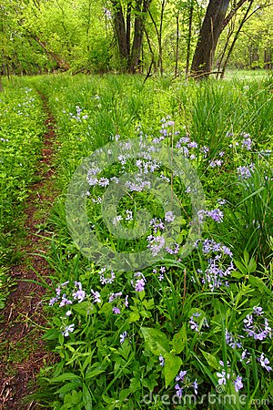 Spring Woodland Foliage Illinois