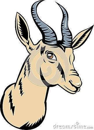 Springbok or gazelle