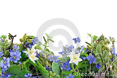 Springs flowers
