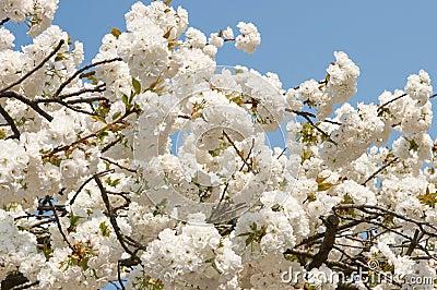 Springtime abundance