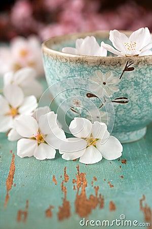 Springtime flower blossoms