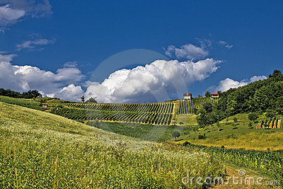 Springtime green idyllic hill with vineyard