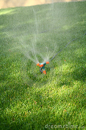 Sprinkler spraying water