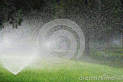 Sprinkling plants