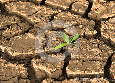 Sprout in cracked mud