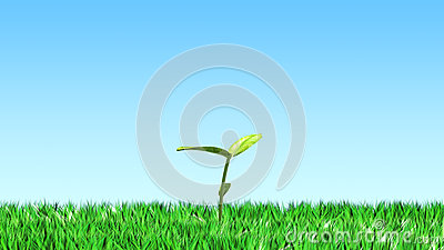 Sprout on the grass