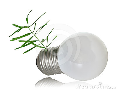 Sprout growing out of the light bulb base