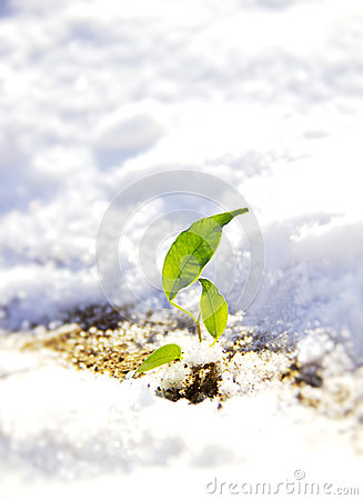 Free Sprout In Snow Stock Photos - 29517813