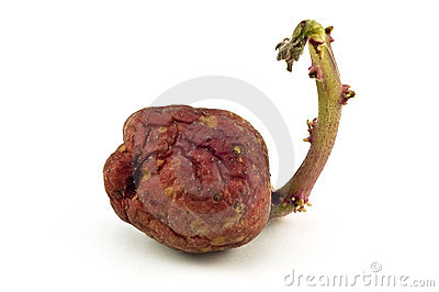 Sprouting Royalty Free Stock Image - Image: 7796656