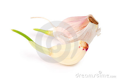 Sprouting garlic cloves