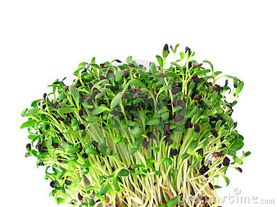 Sprouts de alfalfa