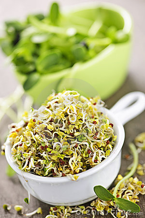 Free Sprouts In Cups Stock Photo - 13876470